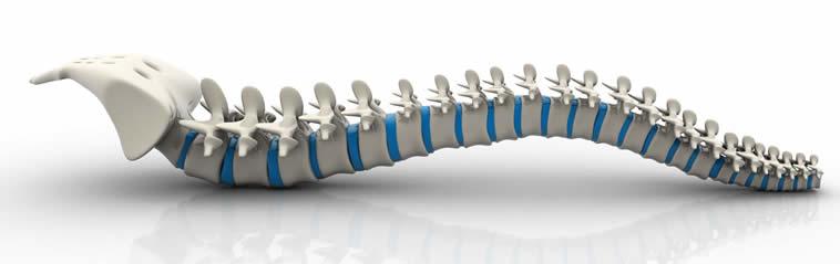 Datos que quizás no sabías sobre la columna vertebral